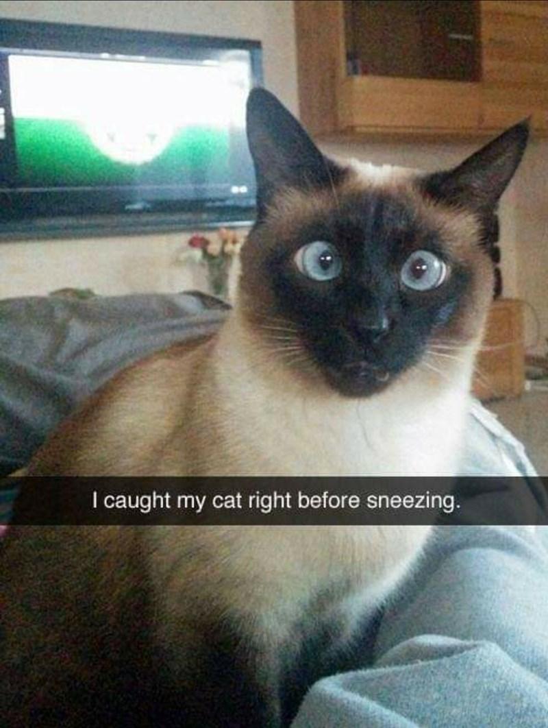 Cat - I caught my cat right before sneezing.