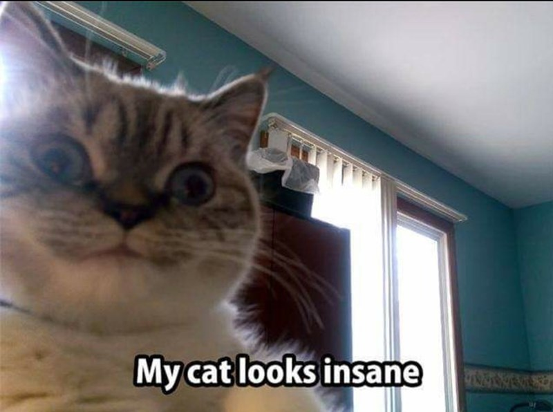 Cat - My cat looks insane