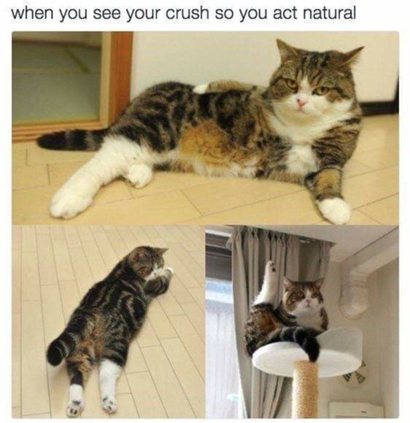 Cat - when you see your crush so you act natural