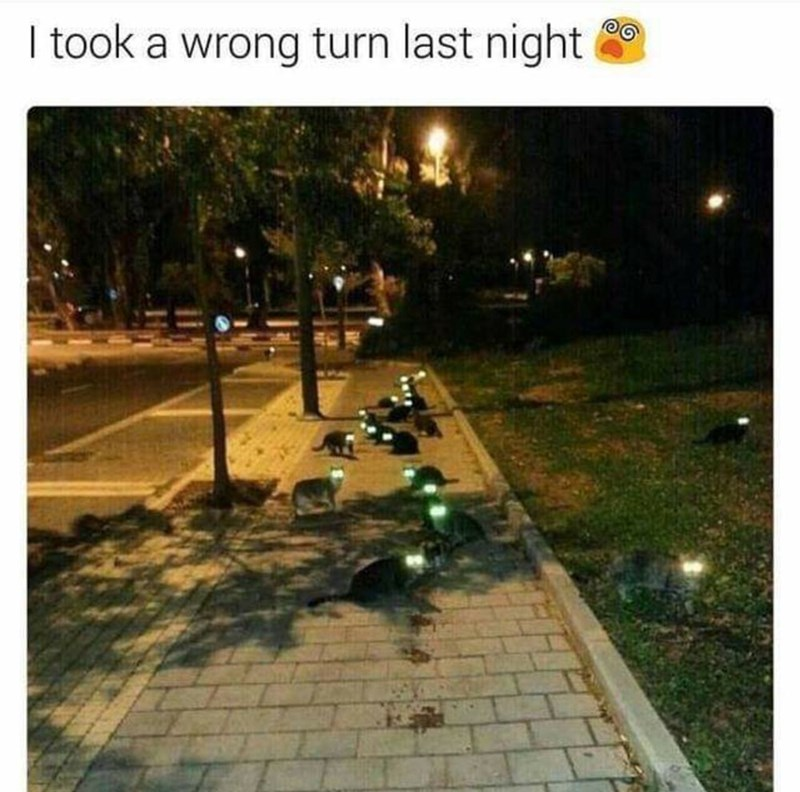 Adaptation - I took a wrong turn last night