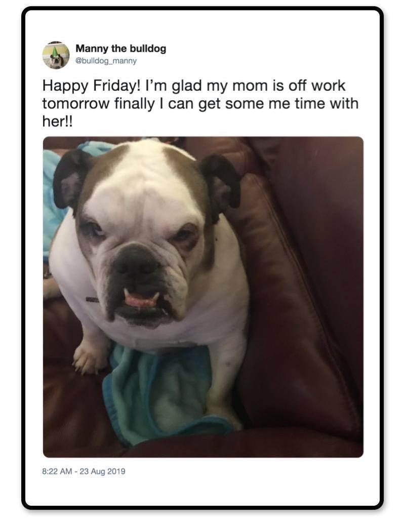 Vertebrate - Manny the bulldog @bulldog manny Happy Friday! I'm glad my mom is off work tomorrow finally I can get some me time with her!! 8:22 AM-23 Aug 2019