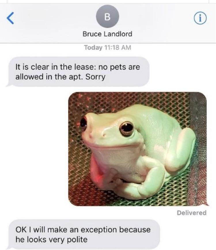 animal memes - 9385227520