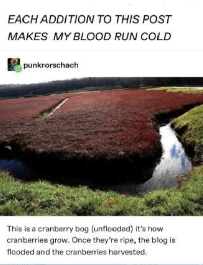Water resources - EACHADDITION TO THIS POST MAKES MY BLOOD RUN COLD punkrorschach This is a cranberry bog (unflooded) it's how cranberries grow. Once they're ripe, the blog is flooded and the cranberries harvested.