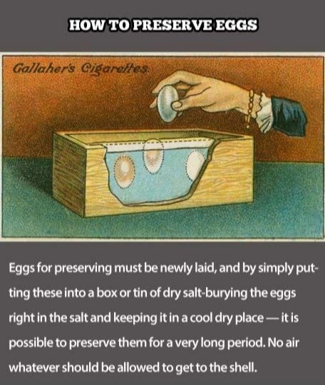 HOW TO PRESERVE EGGS Gallaher's Cigareftes Eggs for preserving must be newly laid, and by simply put- ting these into a box or tin of dry salt-burying the eggs right in the salt and keeping it in a cool dry place-it is possible to preserve them for a very long period. No air whatever should be allowed to get to the shell.