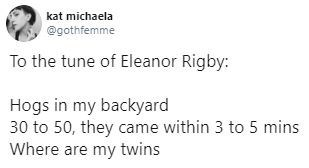 Text - kat michaela @gothfemme To the tune of Eleanor Rigby: Hogs in my backyard 30 to 50, they came within 3 to 5 mins Where are my twins