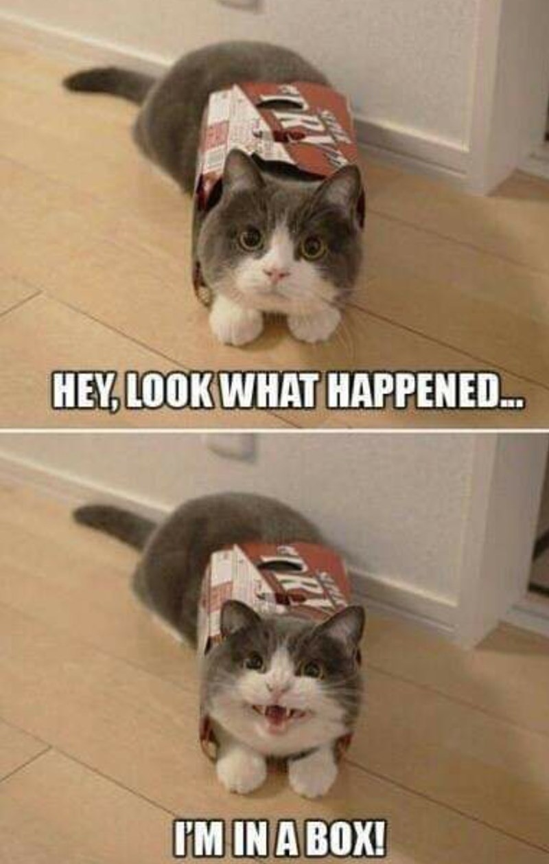 Cat - HEY, LOOK WHAT HAPPENED.. I'M IN A BOX! TR PAR TRY