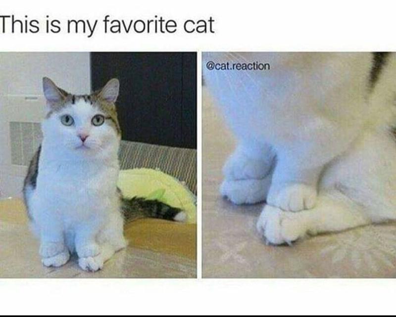 Cat - This is my favorite cat @cat.reaction