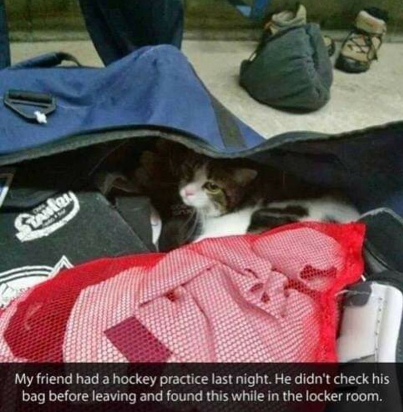 Canidae - My friend had a hockey practice last night. He didn't check his bag before leaving and found this while in the locker room.