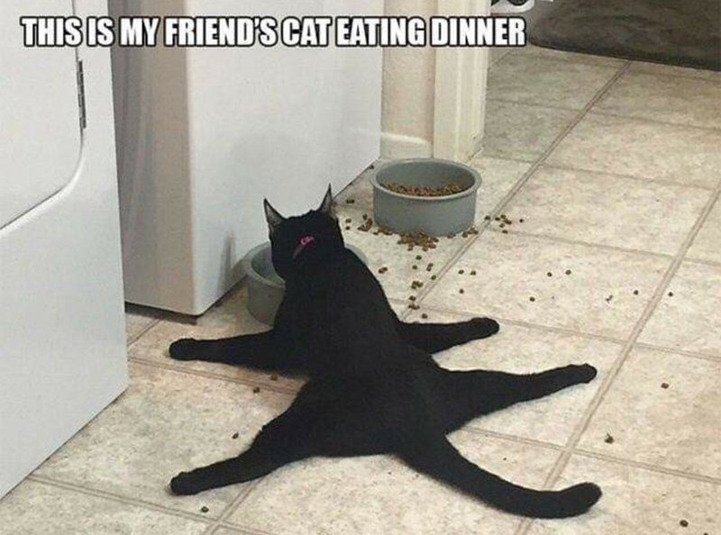 Black cat - THIS IS MY FRIENDS CAT EATING DINNER