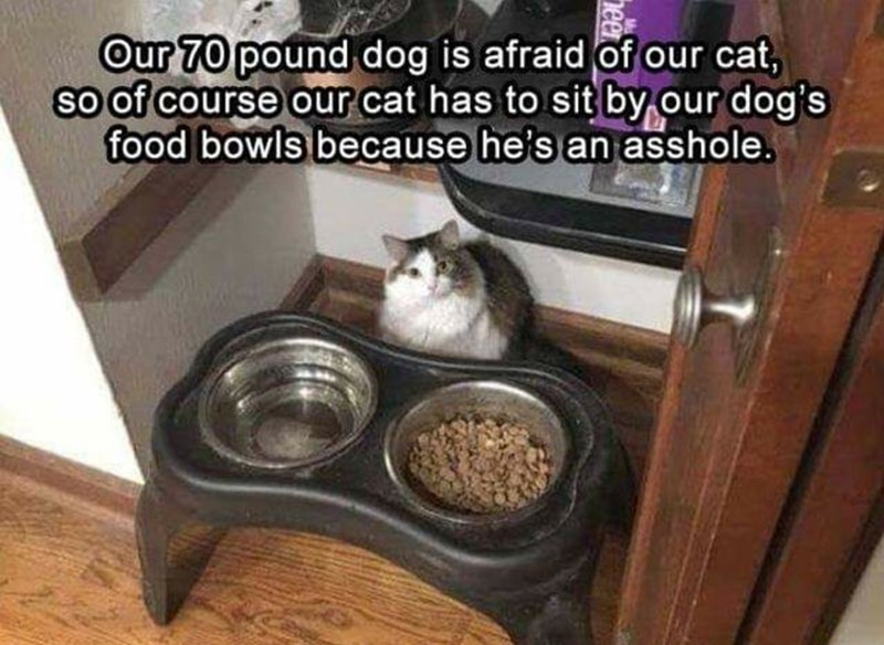 Litter box - Our 70 pound dog is afraid of our cat, so of course our cat has to sit by our dog's food bowls because he's an asshole.
