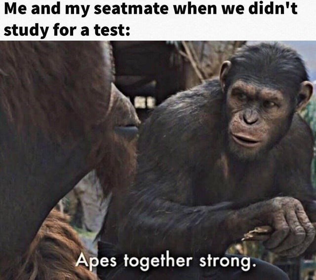 Vertebrate - Me and my seatmate when we didn't study for a test: Apes together strong.