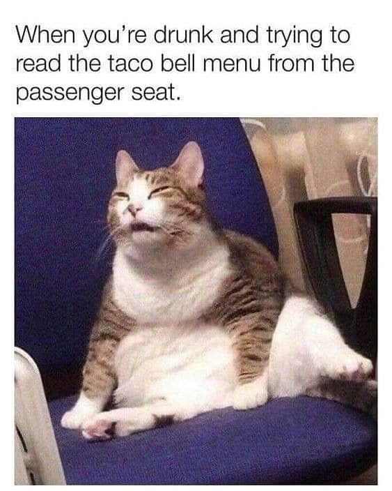 Cat - When you're drunk and trying to read the taco bell menu from the passenger seat.