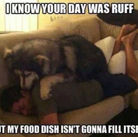 Photo caption - OKNOWYOUR DAY WAS RUFF T MY FOOD DISH ISN'T GONNA FILL ITSE