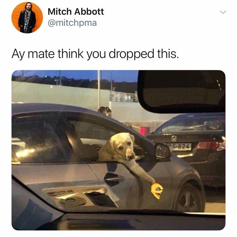 Vehicle door - Mitch Abbott @mitchpma Ay mate think you dropped this. S 824