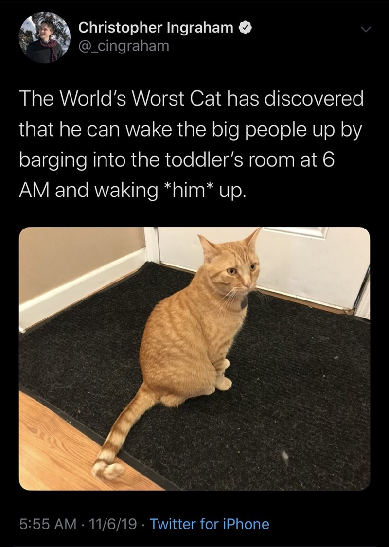 Cat - Christopher Ingraham @_cingraham The World's Worst Cat has discovered that he can wake the big people up by barging into the toddler's room at 6 AM and waking *him* up. 5:55 AM 11/6/19 Twitter for iPhone