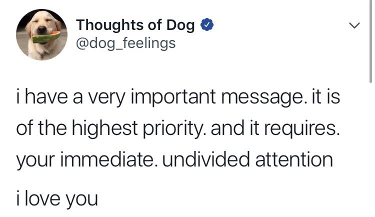Text - Thoughts of Dog @dog_feelings ihave a very important message. it is of the highest priority. and it requires. your immediate. undivided attention i love you