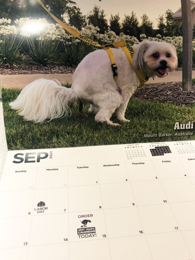 Dog - NERVOUS Audi Mount Barker, Australia GusT a029 sMTWTES SEP 6 2 22 3 24 25 s 2 21 202 21 2 29 21 24 30 3 Satur- Friday Thursday Wednesday Tuesday Monday Sunday 3 2. 1 31 10 9 LABOR 8 DAY 7 6 ORDER NEXT YEARS CALENDAR TODAY! 17 16 15 14 13 ERVOU