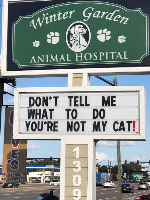 Signage - Winter Garden ANIMAL HOSPITAL DON'T TELL ME WHAT TO DO YOU'RE NOT MY CAT! 1 3 'S MOWER SHOP 407-877-3900 9