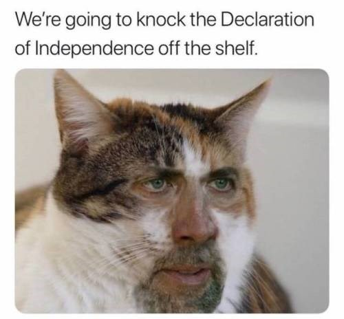 Cat - We're going to knock the Declaration of Independence off the shelf.