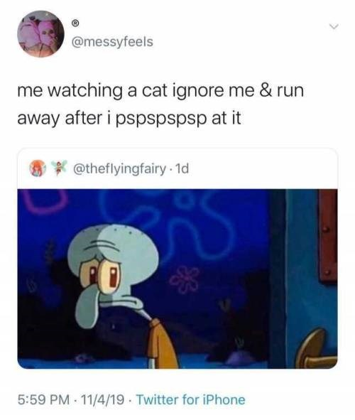 Text - @messyfeels me watching a cat ignore me & run away after i pspspspsp at it @theflyingfairy 1d 5:59 PM 11/4/19 Twitter for iPhone