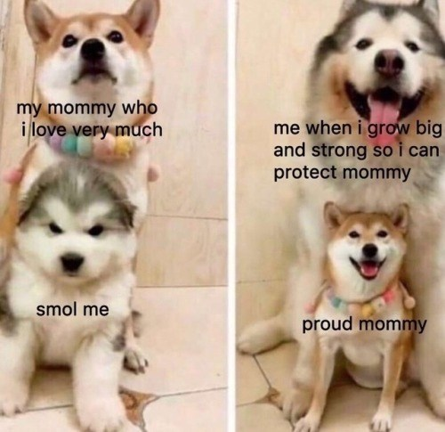 Dog - my mommy who i love very much me when i grow big and strong soi can protect mommy smol me proud mommy
