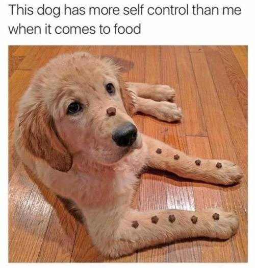 Dog - This dog has more self control than me when it comes to food