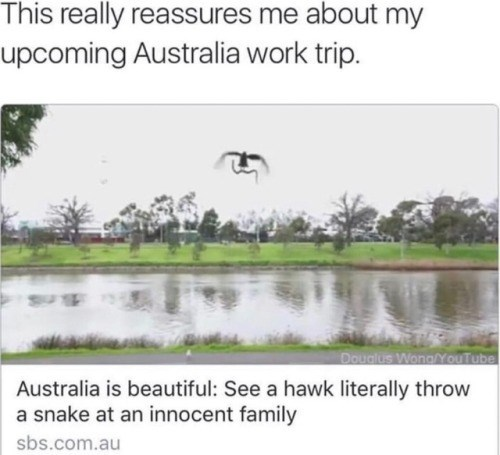 Water resources - This really reassures me about my upcoming Australia work trip. Doualus WongYouTube Australia is beautiful: See a hawk literally throw a snake at an innocent family sbs.com.au