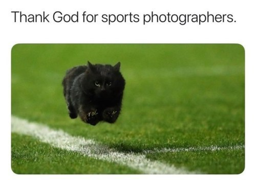 Mammal - Thank God for sports photographers