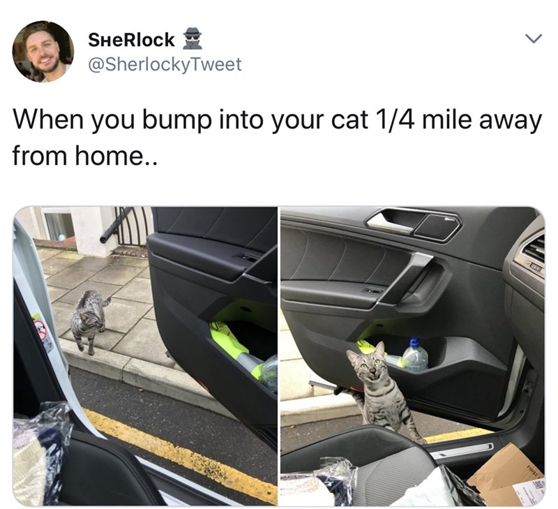 Vehicle door - SHeRlock @SherlockyTweet When you bump into your cat 1/4 mile away from home..