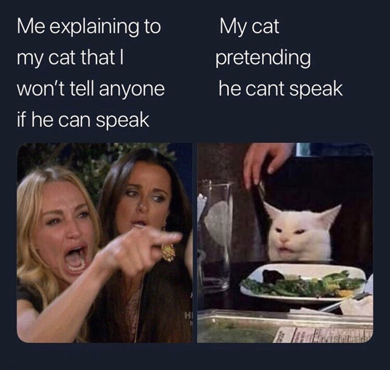 Facial expression - Me explaining to My cat pretending my cat that I won't tell anyone he cant speak if he can speak HI