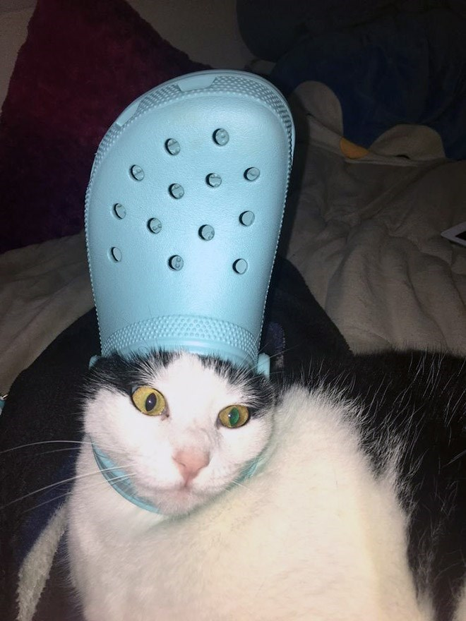 Cat - C O