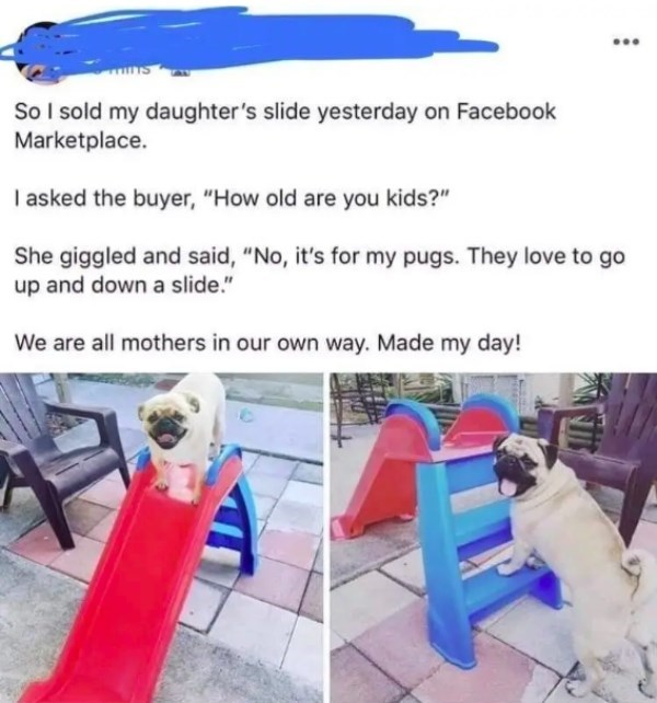 """Recreation - So I sold my daughter's slide yesterday on Facebook Marketplace. I asked the buyer, """"How old are you kids?"""" She giggled and said, """"No, it's for my pugs. They love to go up and down a slide."""" We are all mothers in our own way. Made my day!"""