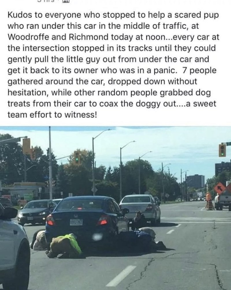 Motor vehicle - Kudos to everyone who stopped to help a scared pup who ran under this car in the middle of traffic, at Woodroffe and Richmond today at noon...every car at the intersection stopped in its tracks until they could gently pull the little guy out from under the car and get it back to its owner who was in a panic. 7 people gathered around the car, dropped down without hesitation, while other random people grabbed dog treats from their car to coax the doggy out....a sweet team effort to