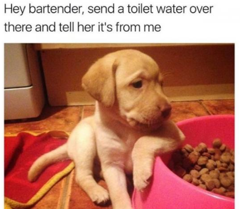 Dog breed - Hey bartender, send a toilet water over there and tell her it's from me