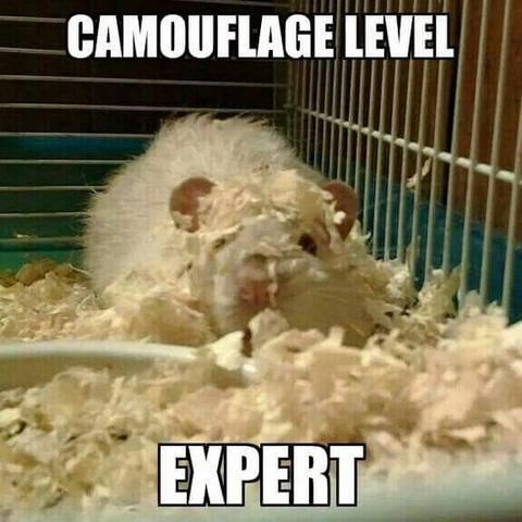 Gerbil - CAMOUFLAGE LEVEL EXPERT
