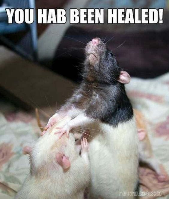 Rat - YOU HAB BEEN HEALED! MarTamousia Ouse cOM