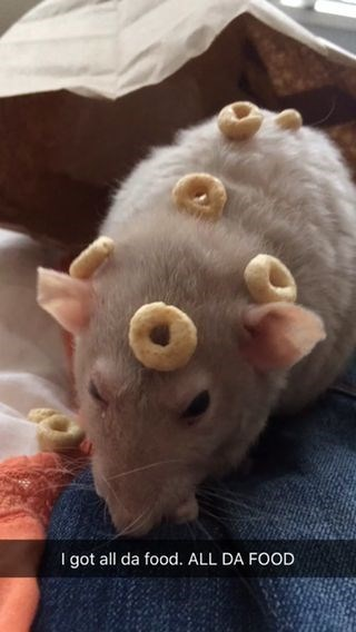 Snout - I got all da food. ALL DA FOOD