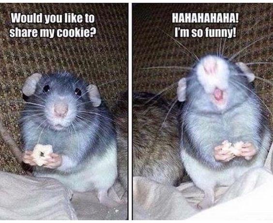 Mammal - Would you like to share my cookie? НАНАНАНАНА! I'm so funny!