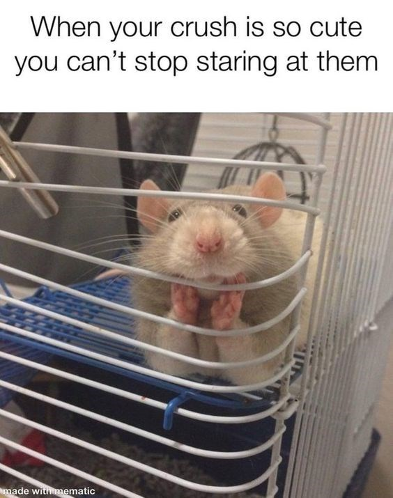 Rat - When your crush is so cute you can't stop staring at them made with mematic