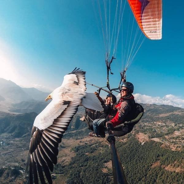 Paragliding - FUse: