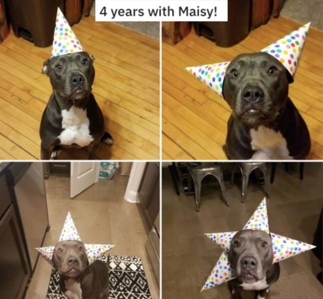 Dog - years with Maisy!