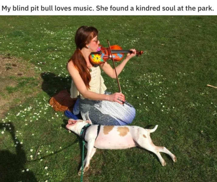 Canidae - My blind pit bull loves music. She found a kindred soul at the park.