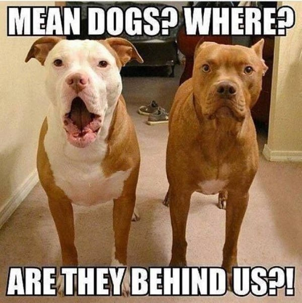 Dog - MEAN DOGS? WHERE? ARE THEY BEHINDUS?!