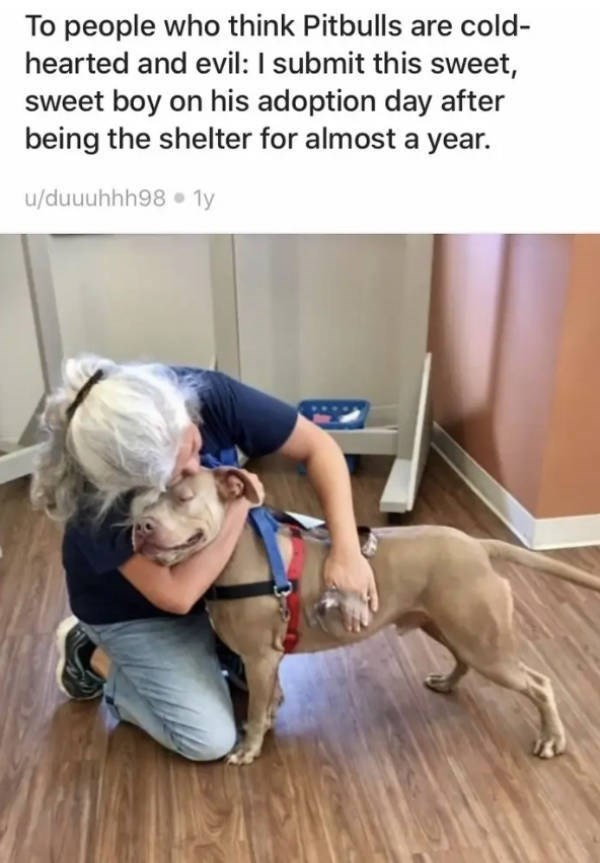 Floor - To people who think Pitbulls are cold- hearted and evil: I submit this sweeet, sweet boy on his adoption day after being the shelter for almost a year u/duuuhhh98 1y