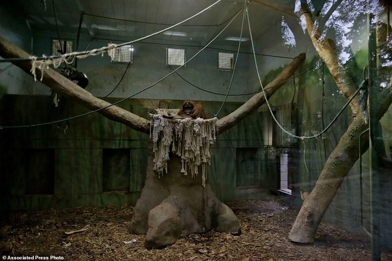 Tree - Associated Press Photo