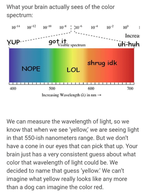 Text - What your brain actually sees of the color spectrum: 10 10 102 10° 0-12 104 10-14 0-to Increa got it Visible spectrum YUP uh-huh shrug idk NOPE LOL 400 500 600 700 Increasing Wavelength ) in nm We can measure the wavelength of light, so we know that when we see 'yellow, we are seeing light in that 550-ish nanometers range. But we don't have a cone in our eyes that can pick that up. Your brain just has a very consistent guess about what color that wavelength of light could be. We decided t