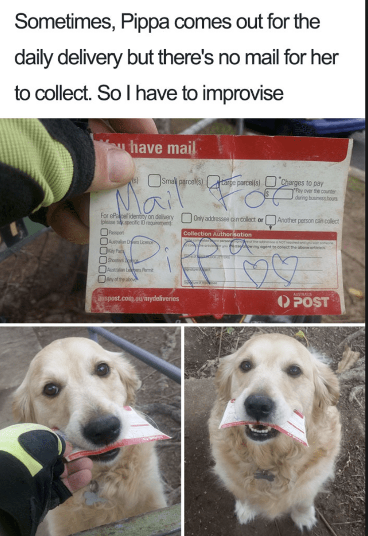 """Dog - Sometimes, Pippa comes out for the daily delivery but there's no mail for her to collect. So I have to improvise have mail s) Smal parcel(s)targe parcels) Charges to pay """"Pay over the counter during business hous For ePa cel identity on delivery (please tik specific ID requirement) Only addressee cn collect or Another person can collect Passport Australian Ders Licence Collection Authorisation Z or ihe addressee NOT and you men vo Peasgblow my agent to collect the obove articlel OKey Pa Sh"""