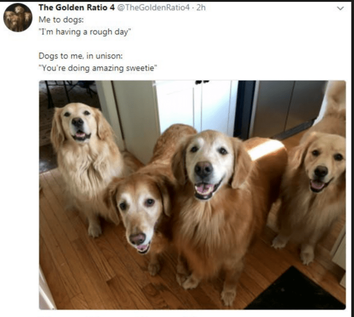 """Dog - The Golden Ratio 4 @TheGolden Ratio4 2h Me to dogs: """"I'm having a rough day"""" Dogs to me, in unison: """"You're doing amazing sweetie"""