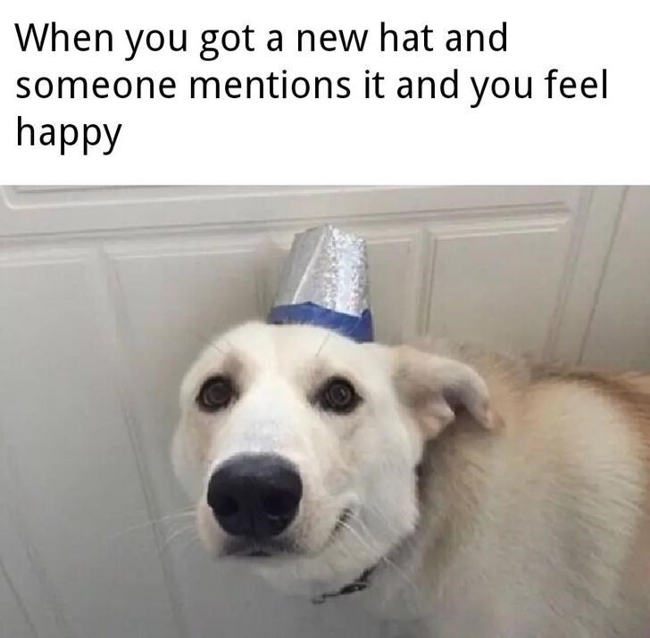 Dog - When you got a new hat and someone mentions it and you feel happy