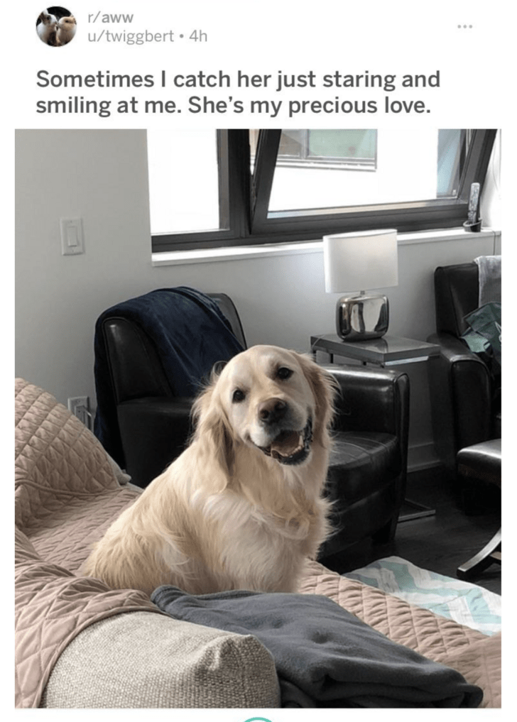 Dog - r/aww /twiggbert 4h Sometimes I catch her just staring and smiling at me. She's my precious love.